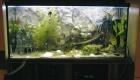 Akwarium w jadalni Monte Negro